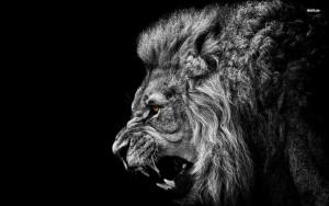 Lion-Roar-Computer-Wallpapers